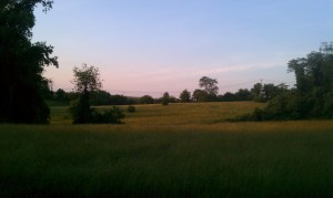 Field at Evening